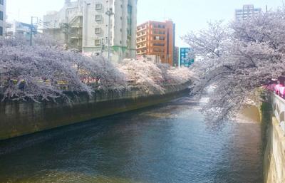 #13桜.jpgのサムネール画像