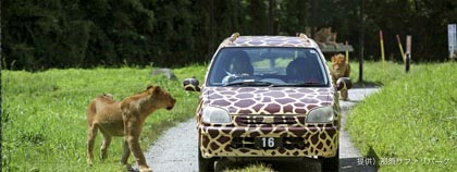 レンタカー ライオンre.jpg