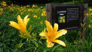 1280px-Rokko_alpine_botanical_garden05s1920.jpg