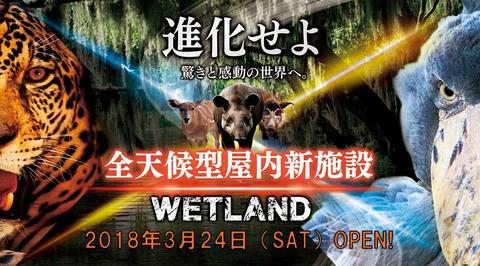 wetland14.jpg