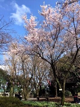 presen_20180324_Sugiyama_03_R.JPG