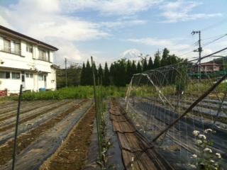 茄子の畑(山梨県富士河口湖町大石)