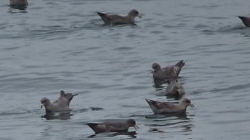 73海鳥 写真2.JPG