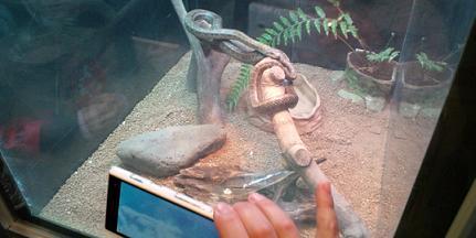 ヘビ.jpg