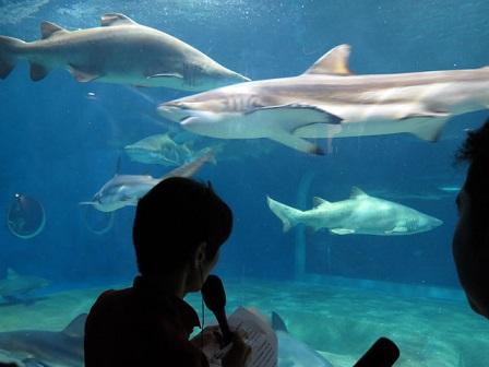 大洗サメ.jpg