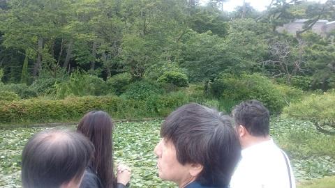 三溪園・菖蒲.jpg