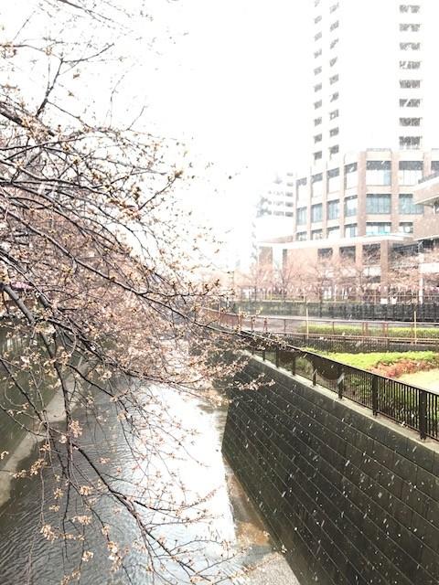 目黒川1.JPG