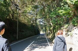 椿のトンネル.JPG