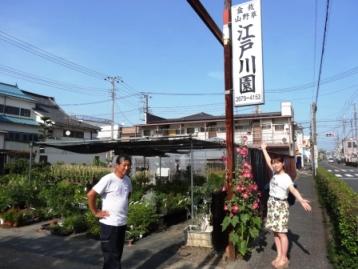 小岩朝顔 (20).JPG