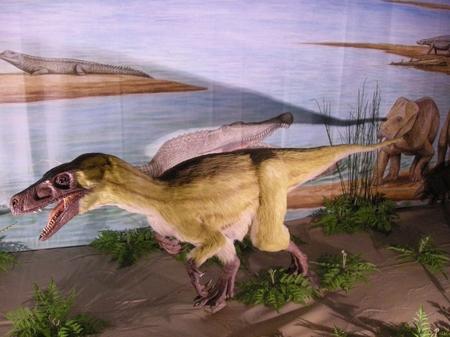 これが羽毛の恐竜.JPG