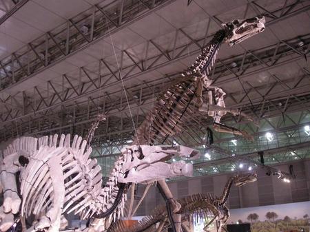 恐竜の化石がいっぱい.JPG