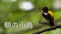 <!--<font color=deeppink><strong>★New!</strong></font>-->文化放送 最長寿番組『朝の小鳥』放送65周年を記念して6月20日(水)に特番放送が決定!