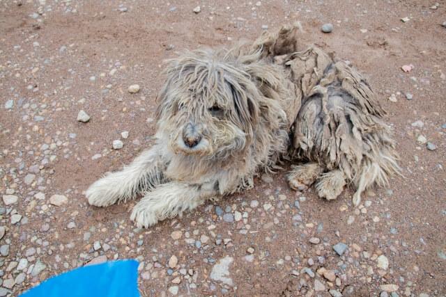 アフガンから犬猫200匹救出せよ 資金集め、元英海兵隊員が奮闘 ~8月27日「おはよう寺ちゃん」