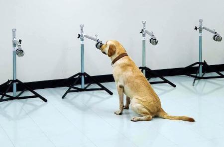 コロナ探知犬に「すごいですね」タイでの研究でビックリ ~6月8日「おはよう寺ちゃん」
